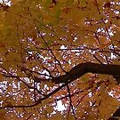 Fall 2013 19 by dge357