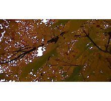 Fall 2013 20 Photographic Print