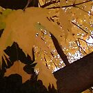 Fall 2013 21 by dge357