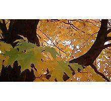 Fall 2013 22 Photographic Print