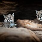 Cougar Town by Thomas Gehrke
