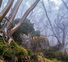 Snow Gums. by Bette Devine