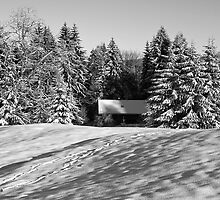 winter scene by caughtinmotion