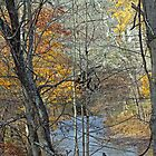 BARE BONES BEAUTY - Perkiomen Creek by MotherNature2
