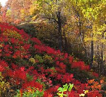 Fall Reds by virginian