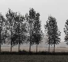 Row of trees in a gloomy day by Daniele Zighetti