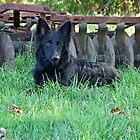 On the Farm by Sandy Keeton