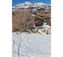 Rabbit Tracks in the Snow Photographic Print