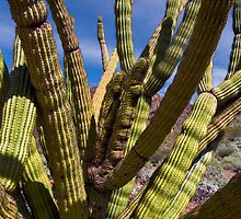 Cristate Organ Pipe Cactus by Kathleen Bishop