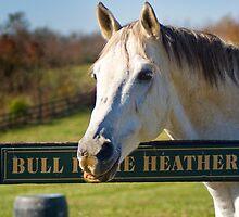 Bull InThe Heather by Nicole  McKinney