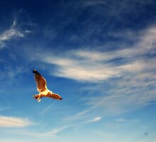 Seagull in Flight 1 by Frances Kilbane