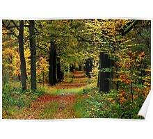 Strolling through the autumnal forest again Poster