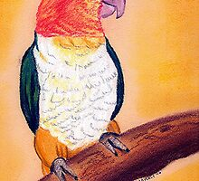 White Bellied Caique by Oldetimemercan