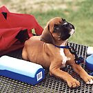 Boxer Puppy at Park by SpiceTree
