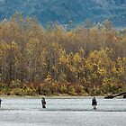 Fall Fishing on the Skykomish River by Jim Stiles