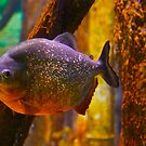 PIRANHA by Sassafras