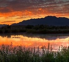 Sunrise Serenity by Sue  Cullumber