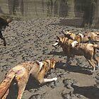 Wolfs  by alaskaman53
