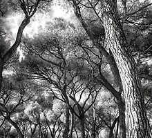 Casa de Campo, Madrid (infrared photography) by Wendy  Rauw