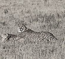 Cheetah Kill Black and White by Michelle Sole