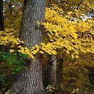Tree Huggers by Adam Bykowski