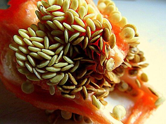 Red Bell Pepper Seeds by trueblvr
