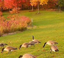 The Geese at Coulon by Mike Cressy