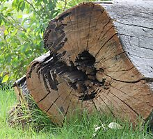 the miracle of timber - sawn eucalyptus by indiafrank