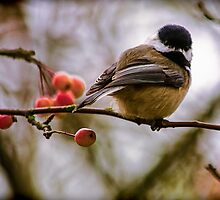 Relationships Are Like Birds by Jordan Blackstone