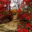 Autumn on the Ridge at Conkle's Hollow by TrendleEllwood