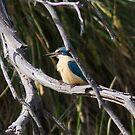 sacred kingfisher by Kym Bradley