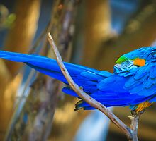 I'm a Pretty Bird by Edvin  Milkunic