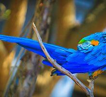 I'm a Pretty Bird by Edvin  Milkunic