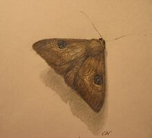 The usual suspects - moth 1 by Nestor
