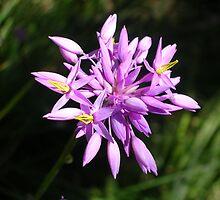 Purple Tassels by lezvee
