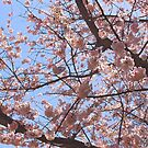 Cherry Branches by debidabble