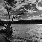 Solitude by Zebi Risidi
