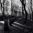 LONELY WALKWAY……. by Zebi Risidi