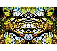 Forever Forest Photographic Print