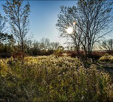 Tom Thompson Park\Fall Meadow 1 by Pete5