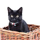 kitten in a basket by wendywoo1972