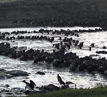 Wildebeest crossing the Mara by Braedene