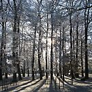 Forest in Frost 3 by shiro