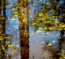 Everglades Reflection by Laura Nations