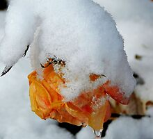 the rose recalled the summer's sun...and cried icicle tears... by WonderlandGlass