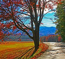 CADES COVE LOOP ROAD,AUTUMN by Chuck Wickham