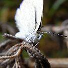 butterfly II by Floralynne