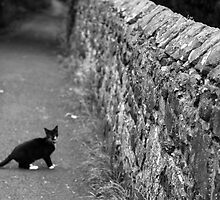 Cat in Scotland  by anniemgo