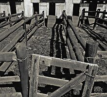 Old Shearing Shed (duotone) by graphicscapes