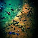 Fish Through the Tunnel by RockyWalley
